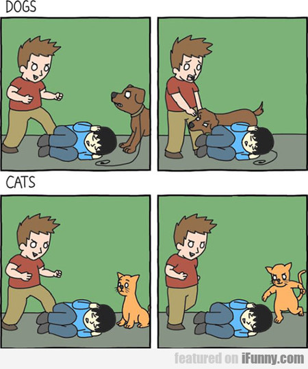 Dogs Vs Cats, The Main Difference
