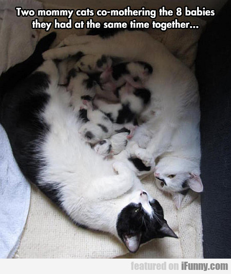 Two Mommy Cats Co-mothering The 8 Newborns