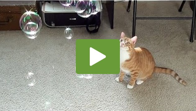 Bubbles .. It's Like Catnip!