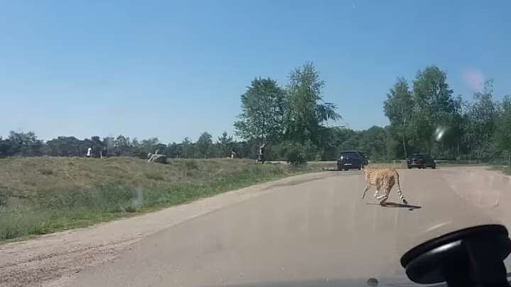 Family Decide To Dismiss The Rules And Leave Their Car At A Safari park. This Was A Bad Decision