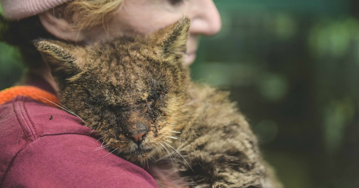 With One Little Hug…Rescuer SAVES Cat No One Would Touch's Life