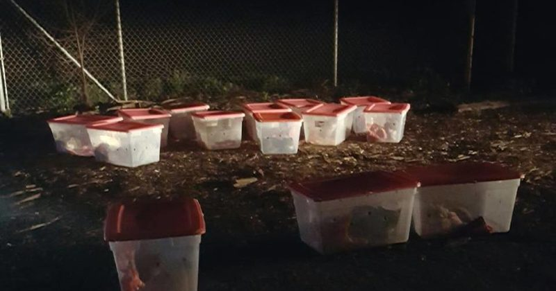 They Came To Run And Found Plastic Bins With Something Heartbreaking Inside