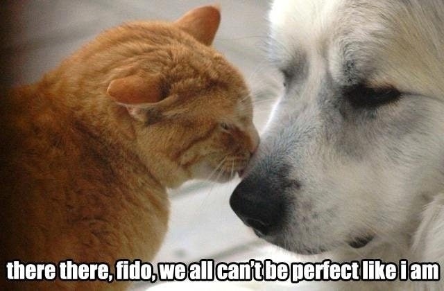 What Cats Really Say To Dogs