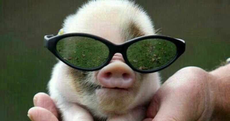 15 Adorable Animals That Are Rocking The Glasses Look