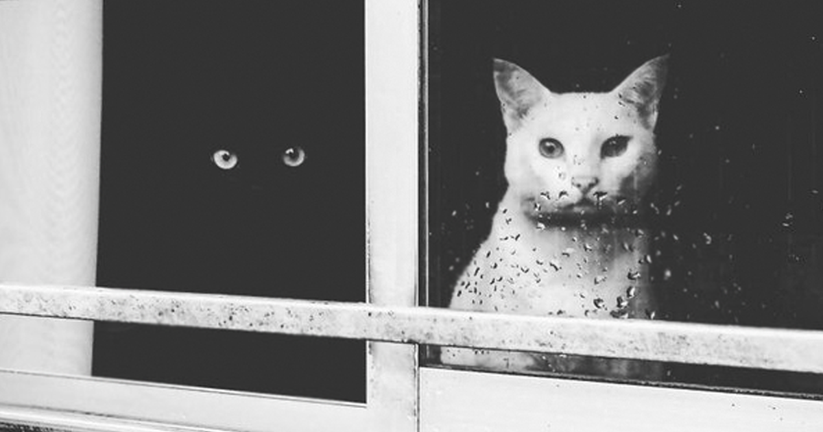 10+ Yin And Yang Cats That Look Purffect Together Despite Their Changes