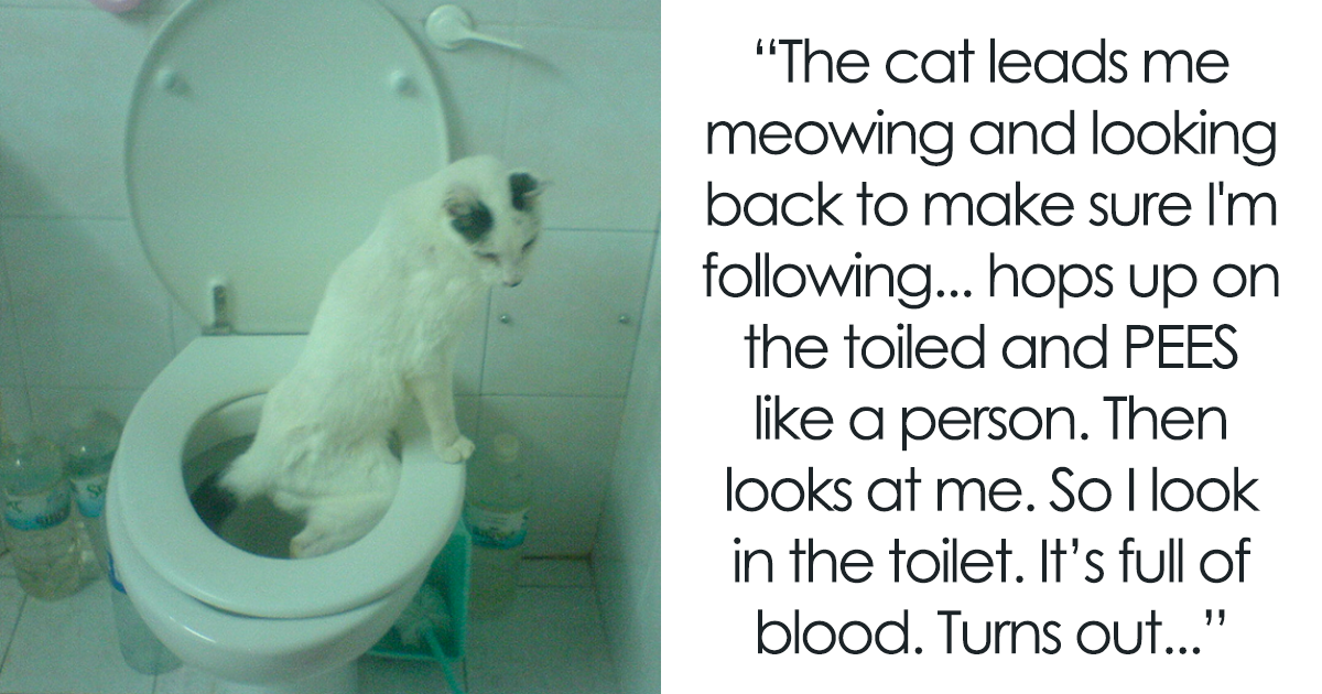 20+ Of The Most Unbelievably Smart Things Pet Have Done That Surprised Their Owners
