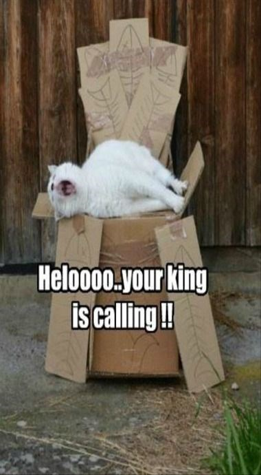 Cats Are The King
