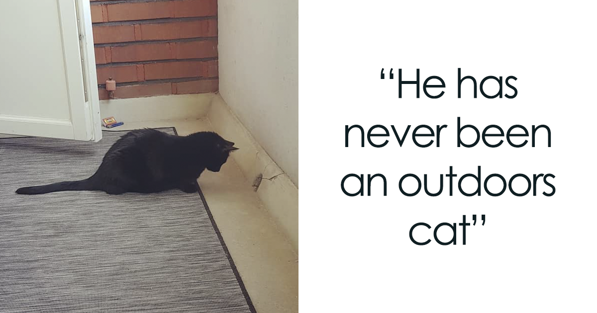 People Are Laughing At The Way This Cat Reacts To Being Allowed On The Balcony For The First Day