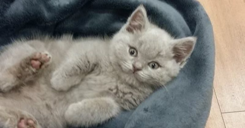 Want A Job Cuddling Cats? Move To Dublin To Make Your Dreams Come True
