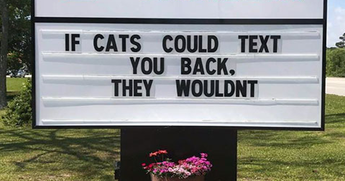 30 Of The Funniest Cat Jokes Vet Clinics Put Up On Their Signs