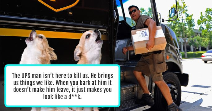 People Reveal the 11 Things They Would Say to Their Pet If They Could Speak the Same Language