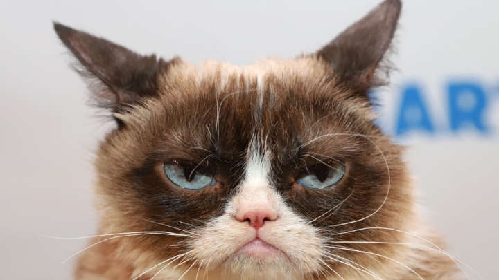 RIP Grumpy Cat: The Science Behind The Felines Famous Frown