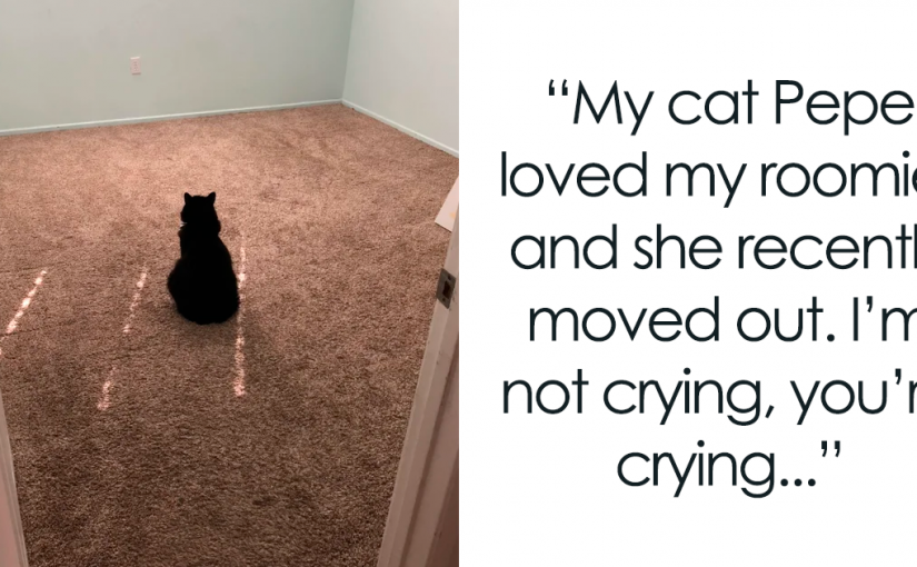 45 Wholesome Cat Posts That Will Hopefully Make Your Day